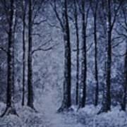 Winter Woods Eve Art Print