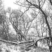 Winter Woods On A Stormy Day 2 Bw Art Print