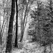 Winteress Art Print