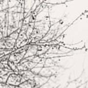 Winter's Berries In Black And White Art Print