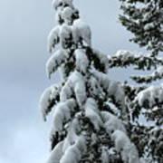 Winter's Burden Art Print