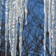 Winter's Icy Fingers Art Print