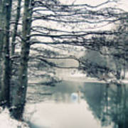 Winter's Reach II Art Print