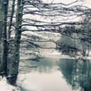 Winter's Reach Art Print