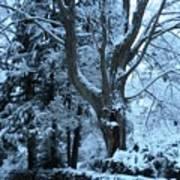 Winter's Touch Art Print