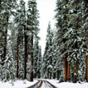 Wintry Forest Drive Art Print