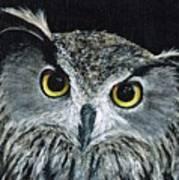 Wise Eyes II Art Print