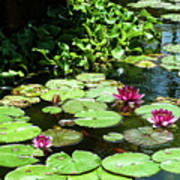 Wishes Among The Water Lilies Art Print