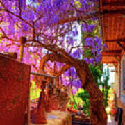 Wisteria Canopy In Bisbee Arizona Art Print