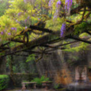 Wisteria Flowers Blooming On Trellis Over Water Fountain Art Print