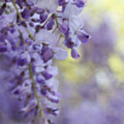 Wisteria's Soft Floral Whispers Art Print