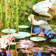 Withered Lotus In The Pond 2 Art Print