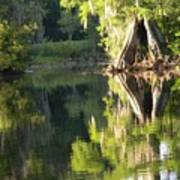 Withlacoochee Cypress Reflections Art Print