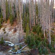 Wolf Creek Pass Forest Landscape Art Print