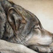 Wolf Nap Art Print