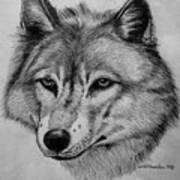 Wolf Sketch Art Print