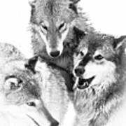 Wolf Triplets Art Print