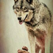 Wolf Wonder Art Print