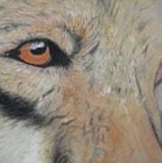 Wolf's Gaze Art Print