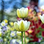 Photographer Behind The Flowers Art Print