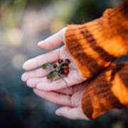 Woman Hands Holding Cranberries Art Print
