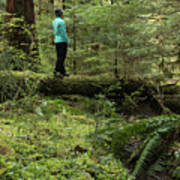 Woman On A Moss Covered Log In Olympic National Park Art Print