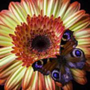 Wonderful Butterfly On Daisy Art Print