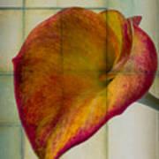 Wonderful Calla Lily Art Print
