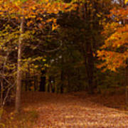 Wonderful Fall Colors Art Print by Robert  Torkomian