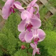 Wonderful Orchid Art Print