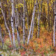 Wonderful Woods Wonderland Art Print