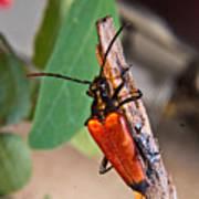 Wood Beetle Exploring Art Print