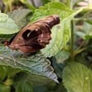 Wood Butterfly Art Print