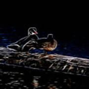 Wood Duck Pair - Fractal Art Print