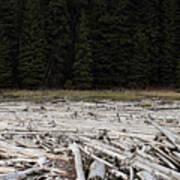 Wood Forest At Duffy Lake Art Print