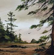 Wooded Shore Art Print