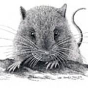 Woodland Jumping Mouse Art Print