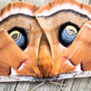 Woodland Moth Art Print