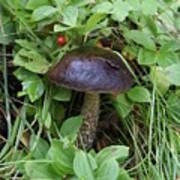 Woodland Mushroom Art Print