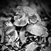 Woodland Mushrooms In Black And White Art Print