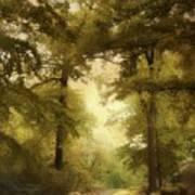 Woodland Passage Art Print