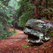 Woodland Path Naugatuck State Forest Art Print