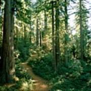 Woodland Path Winding Through A Grove Art Print