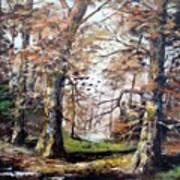 Woodland Pond  Art Print