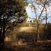 Woodland View  Art Print