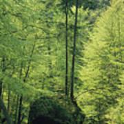 Woodland View With Stream, Sachsische Art Print
