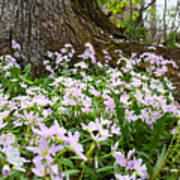 Woodlands Spring Beauty Art Print