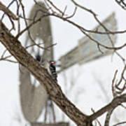 Woodpecker And Windmill Art Print