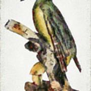 Woodpecker Red Heads Art Print