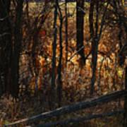 Woods - 1 Art Print